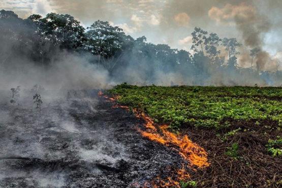 Pożary w Brazylii i ich kontrapunkty na świecie