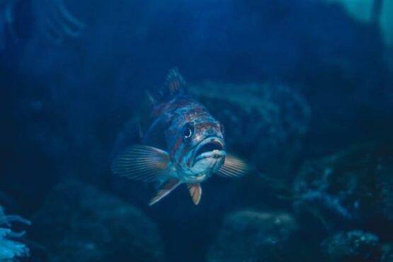 ŁAŃCUCH POKARMOWY: Jak znikają ryby