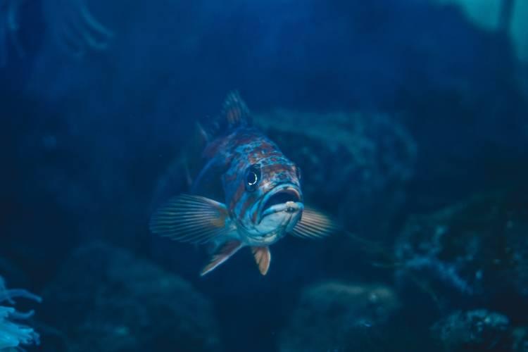 ocean_fish_www